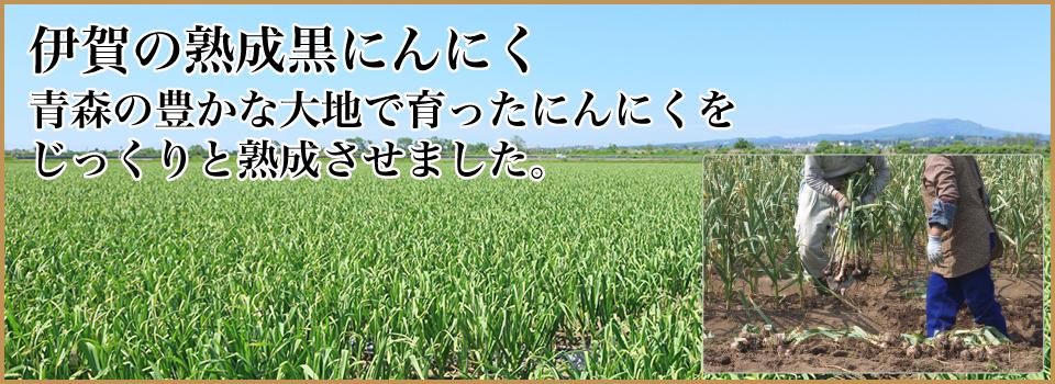 伊賀の熟成黒にんにく:青森産の厳選にんにくをじっくりと無添加熟成